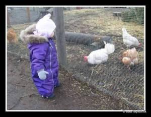 Trip To Farm