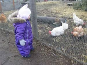 Visit To Farm
